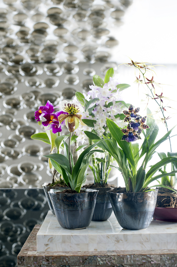 Houseplant-of-the-Month-Speciality-Orchids-Flowerona-1