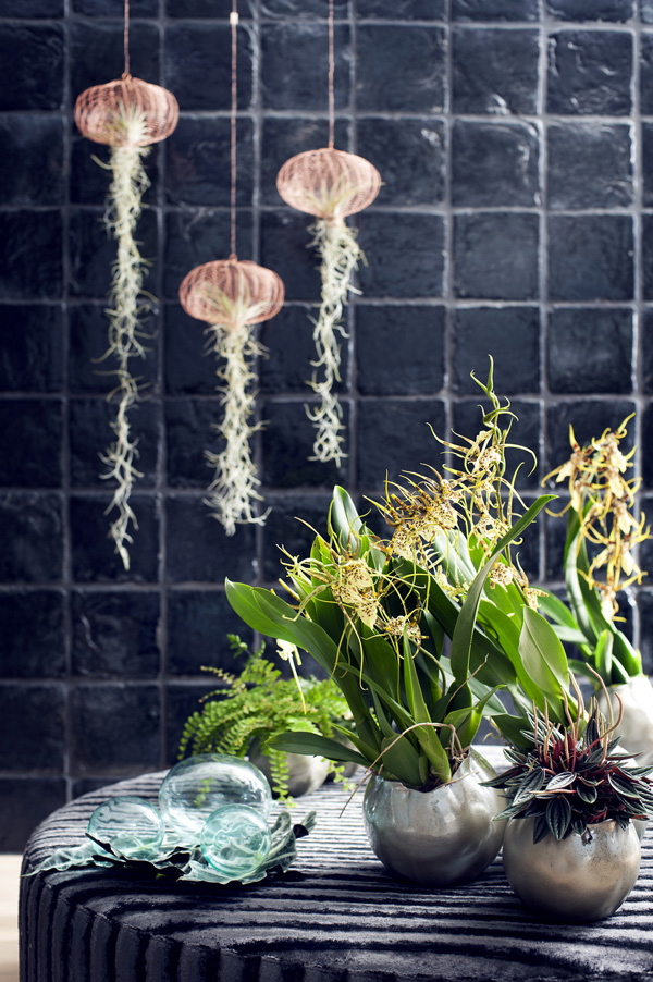 Houseplant-of-the-Month-Speciality-Orchids-Flowerona-14