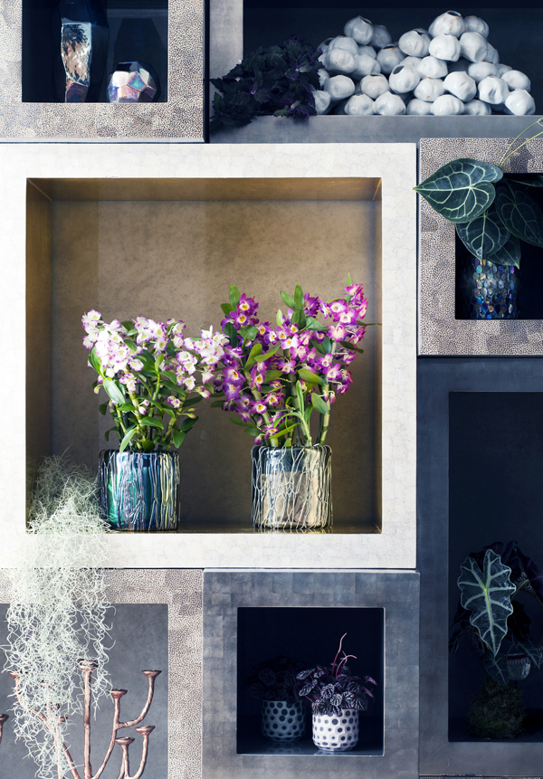 Houseplant-of-the-Month-Speciality-Orchids-Flowerona-17