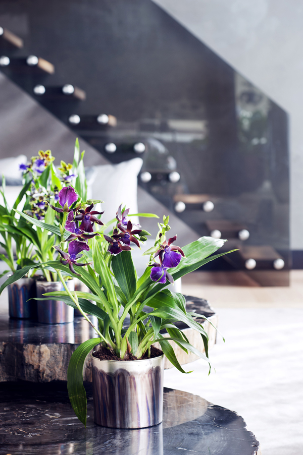 Houseplant-of-the-Month-Speciality-Orchids-Flowerona-5