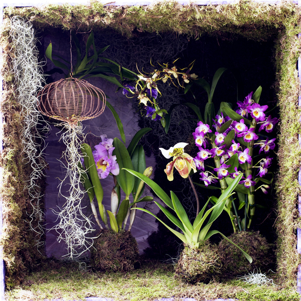 Houseplant-of-the-Month-Speciality-Orchids-Flowerona-9